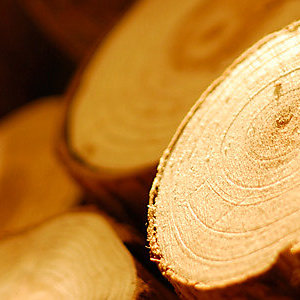 A new standard for tracing wood to sustainable sources is now in development
