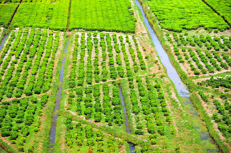Aerial view of a tea plantation