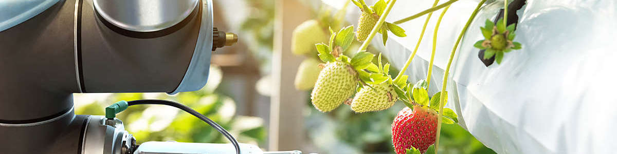 A smart farm automation robot assistant, picking strawberries.