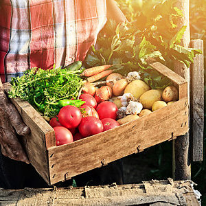 Old man's hand holding a wooden crate filled with fresh vegetables.