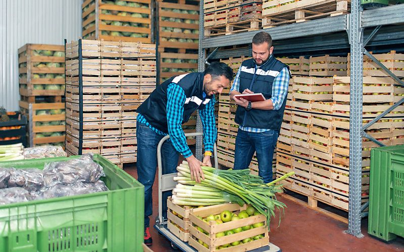 Two workers inspecting fresh vegetables in a warehouse.