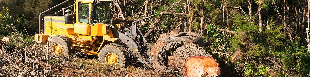 Tractor moving a logged tree.