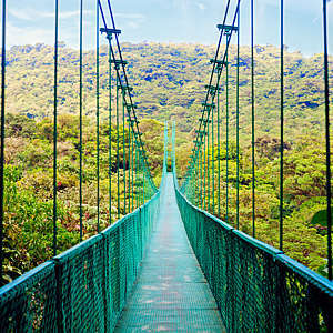 View of a suspension bridge walkway in a Costa Rican cloud forest.