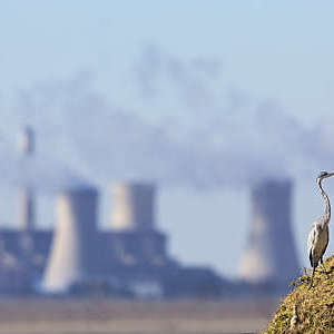 Landscape with a Grey Heron and a power station with pollution in the background.