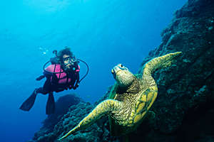 Female scuba diver and a green turtle, underwater.
