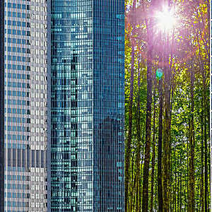 Leafy green trees stand tall amid city skyscrapers.