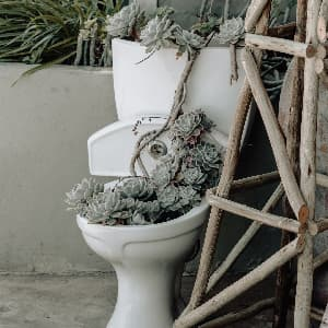 Green succulent plants in white toilet bowl.