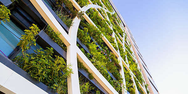 Low-angle shot of a vertical garden on a building's façade.