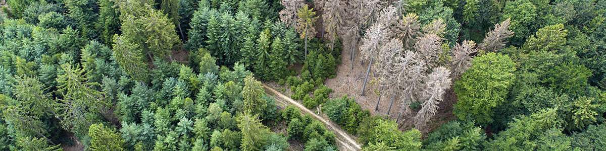Aerial view of dead trees in Waldsterben, Germany.