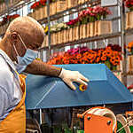 Factory worker wearing a face mask and gloves against coronavirus goes about his duties on a gerbera flower production line.
